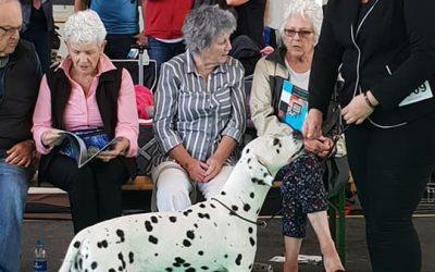 World dogshow Amsterdam